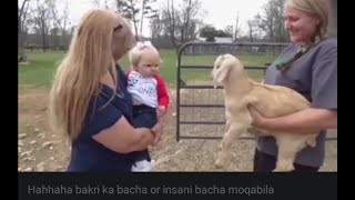 Cute baby and animals baby vary funny