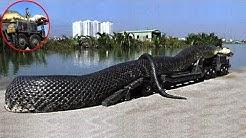 Die größten Schlangen der Welt!
