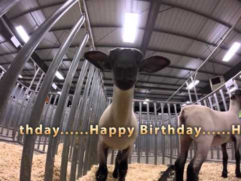 Sheep Singing Happy Birthday!!!