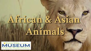BVM Exhibits: African & Asian Animals