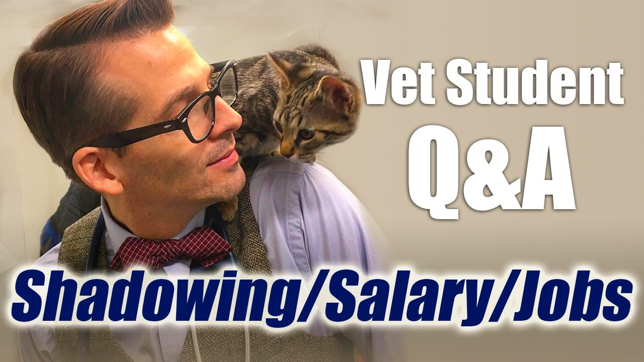 vet student q a different jobs career salary and shadowing a vet student q a different jobs career salary and shadowing a veterinarian