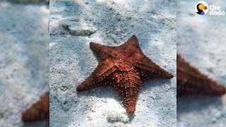 Girl Throws Starfish Back Into Ocean To Save Their Lives