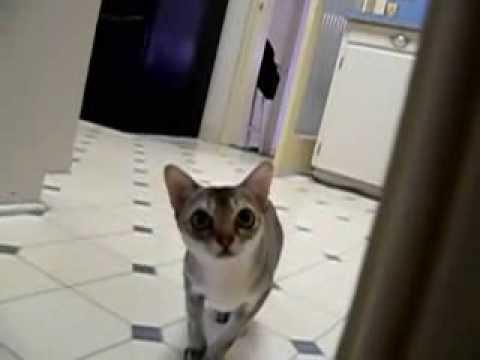 Sneaky Ninja Cat
