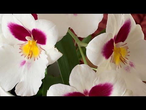 Обзор моей коллекции орхидей на декабрь. Орхидеи в доме.