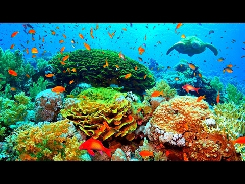 The Great Barrier Reef | Old Australian Documentary | Underwater Coral Sea Life | Down Under