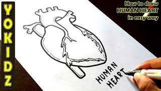 How to draw HUMAN HEART in easy way