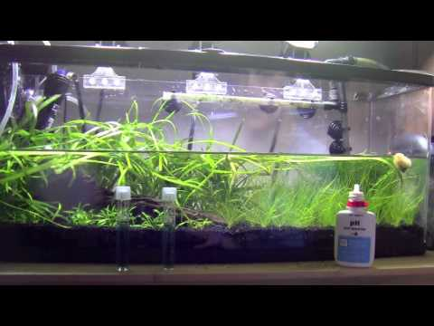 How To: Betta Water Change