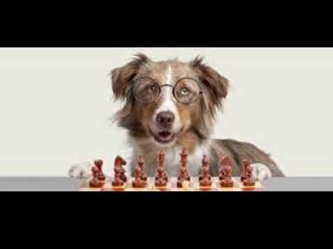 adrienne-farricelli-brain-training-for-dogs-list-natural-brain-training-for-dogs-4th-edition