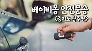베이비몽 강아지분양 전문, 경기도 광주 안전운송편