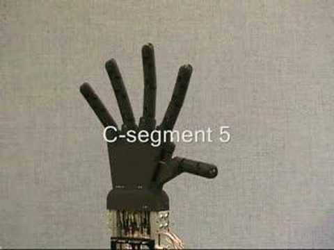 C-segments