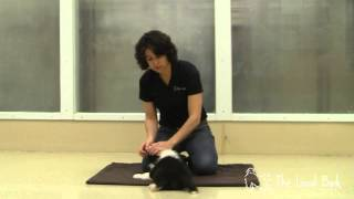 Puppy Training Essentials: The Calming Sit