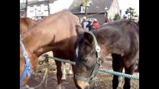 Paardenmarkt Lottum 2012