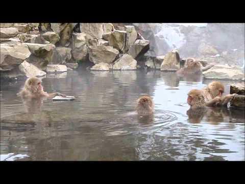 Macaques japonais dans les sources d'eau chaude