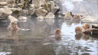 getlinkyoutube.com-Macaques japonais dans les sources d'eau chaude
