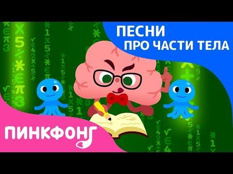 Про мозг мультфильм