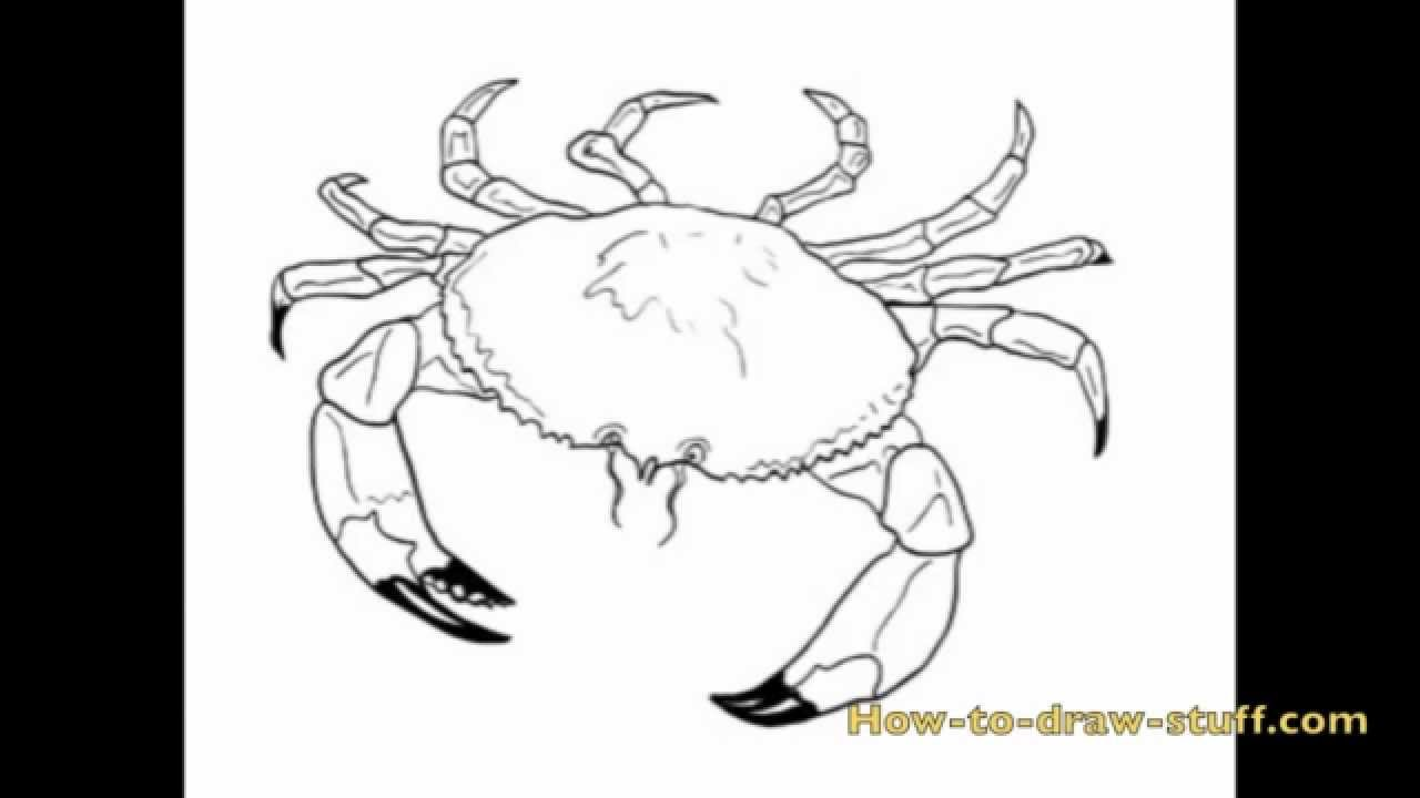 How to draw a crab step by step youtube pooptronica Image collections