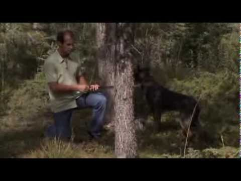 OMG you have to see this. TV Star Brad Pattison, tame a wild dog