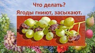 видео Виноград