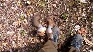 Funny Animal Encounter -Surrounded by a Loving Mother Squirrel And Its Cute Pup.