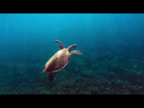 Stray Australia - Great Keppel Island