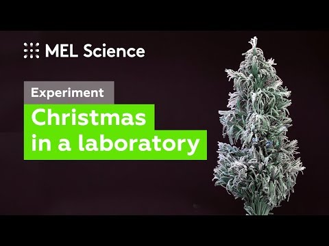 Christmas — Experiment with benzoic acid