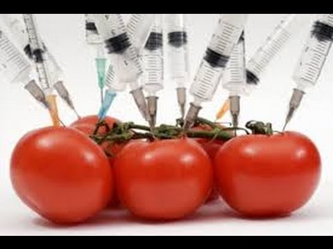 The White Man is The Devil:GMO's