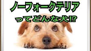 ペットで犬を飼おうと迷っている方へ〜ノーフォークテリア〜 世の中には...