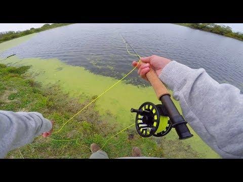 Fly Fishing for Giant Bluegills
