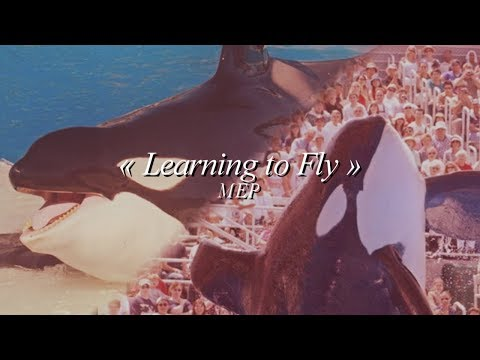 » Learning to Fly  •  Favorite Orcaᴹᴱᴾ
