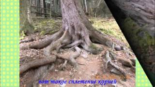 видео Кёль-Чат - маршруты из Теберды, Домбая