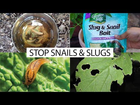 How to control snails & slugs in your garden - 5 EZ organic methods