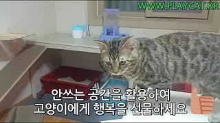 고양이 놀이터 공간활용 끝판왕 강력추천 플레이캣 원목 …