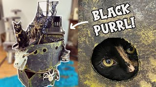 Cardboard Box Pirate Ship for Cats!
