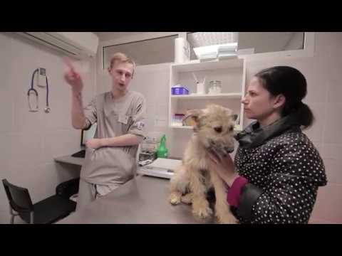 Собаки с отлова  Вирус Чумы и Парвовирусный энтерит  Язва глаза  Жужа и Марси ютуб