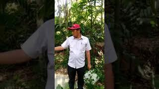 WAWANCARA EKSLUSIF PANGULU NAGORI SAMBOSAR RAYA TENTANG DANA DESA