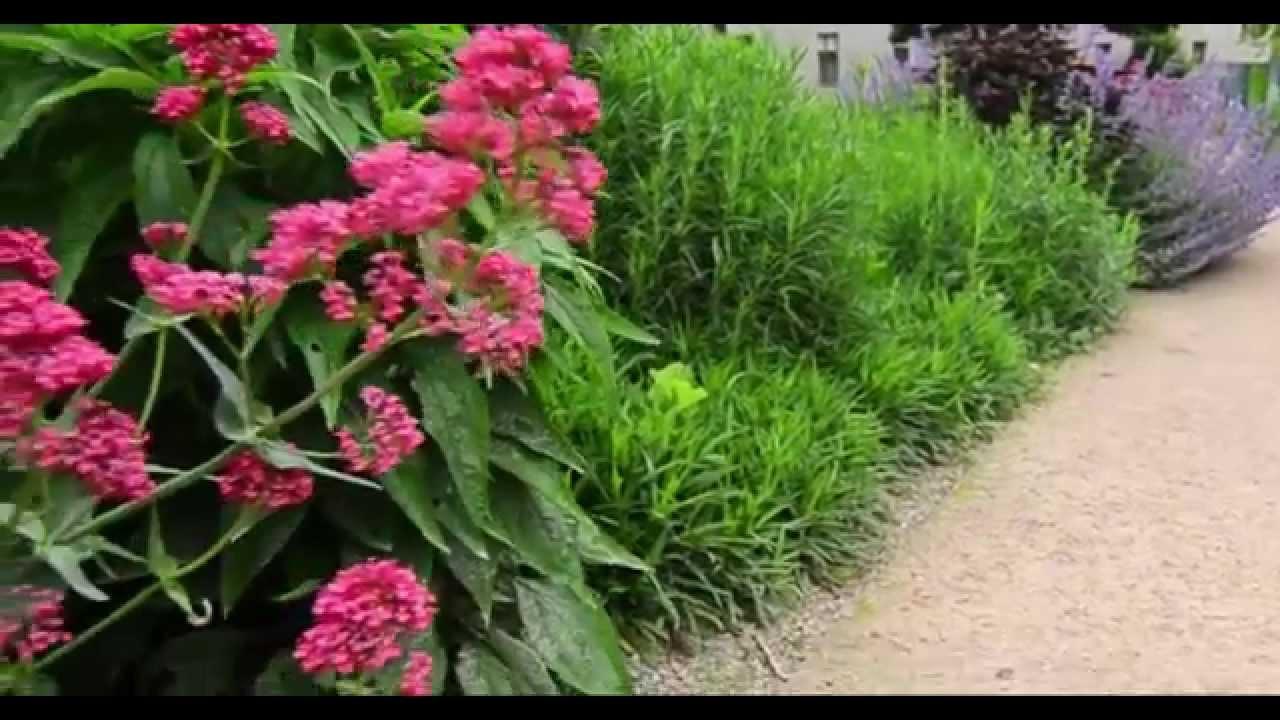 flower garden path - Flower Garden Path