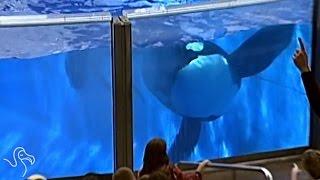 SeaWorld Admits To Sending A Spy