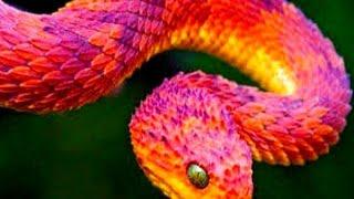10 Weirdest Snakes