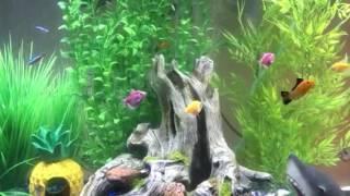 38 gallon marineland aquarium