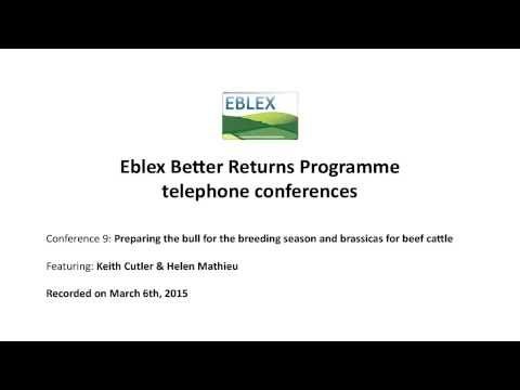 Preparing The Bull For The Breeding Season And Brassicas For Beef Cattle: EBLEX Teleconference
