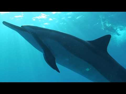 Blue Ocean Dolphin Encounters
