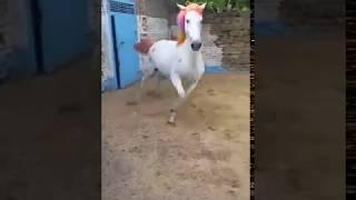 Лошади, и другие животные. Юмор, приколы.
