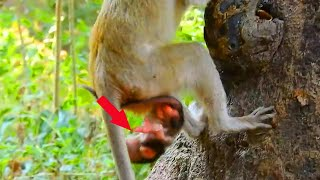 million pity Duchess new born baby falling down from a tree//so sad&poor new baby,Nature Wildlife