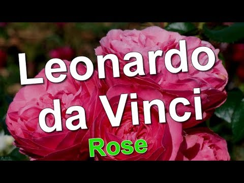leonardo da vinci rose youtube. Black Bedroom Furniture Sets. Home Design Ideas