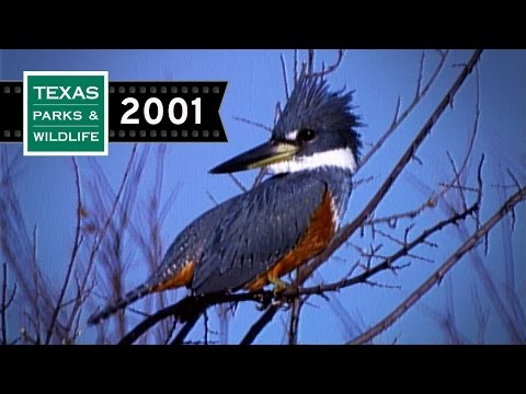Oasis Of The Kingfisher | 2001 Throwback