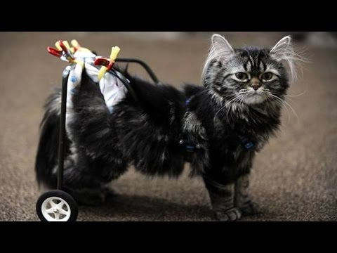 10 Adorable Animals That Use Wheelchairs