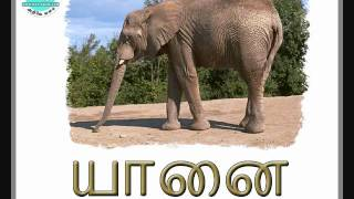 This Animals 2 - Tamil video has been moved to
