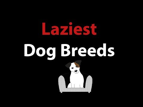 Laziest Dog Breeds: Top 7