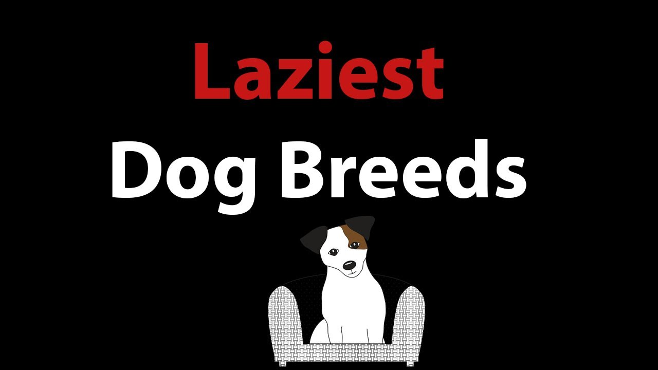What Are The Laziest Dog Breeds