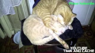 Кот Тима и Кеша - стул на двоих / funny cats